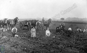 Upper Dunsforth, Potato Pickers